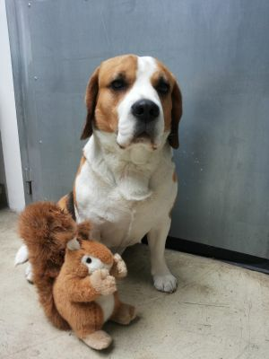 Kinohund Henry